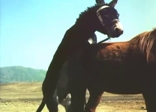 Stunning black pony fucked a brown horse